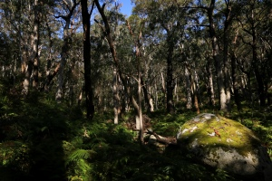 Daylight lingers in shaded forest, on granite boulder.