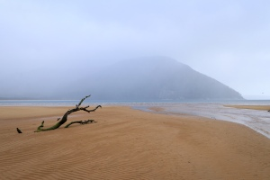 Tree stag exposed by low tide, misty Prom morning.