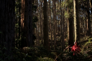 VNPA Nature Campaigner Shannon Hurley gazes towards canopy, in an 'older' patch of Wombat forest.