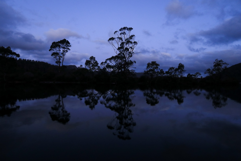 Eucalypts reflected in Lake St Clair evening light