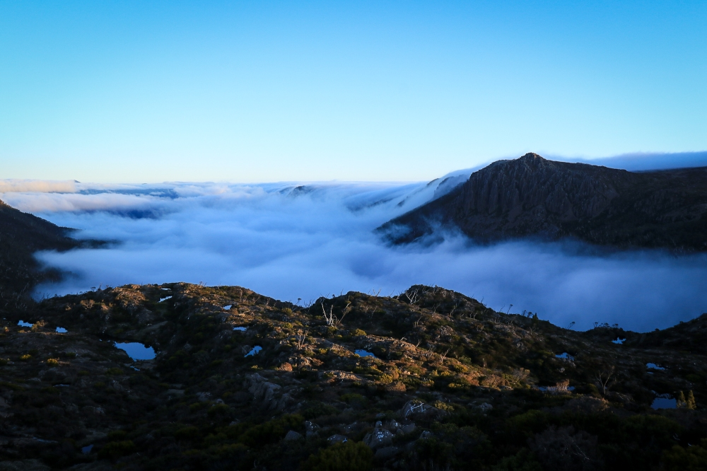 Fluffy morning fog fills a valley, rough vegetation in foreground in golden light